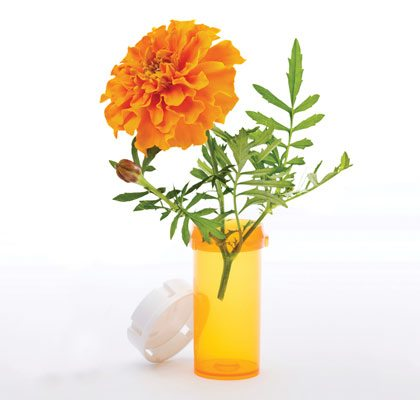 sept14_marigolds_2