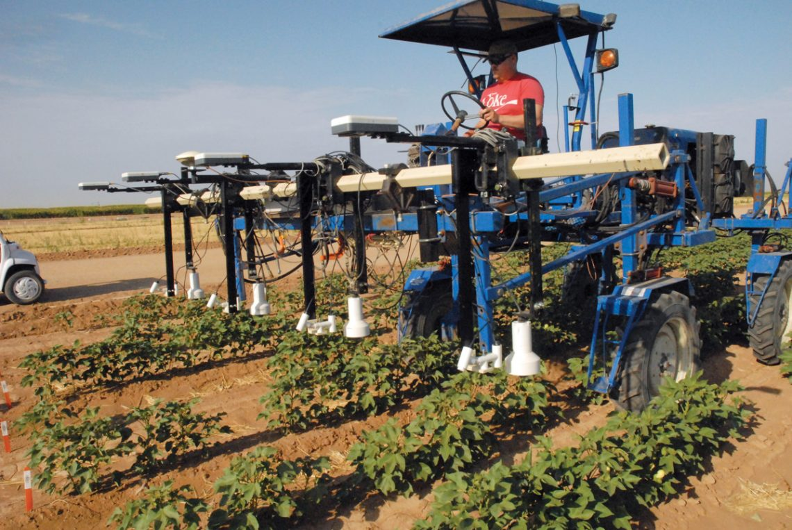 Cotton with phenotyping