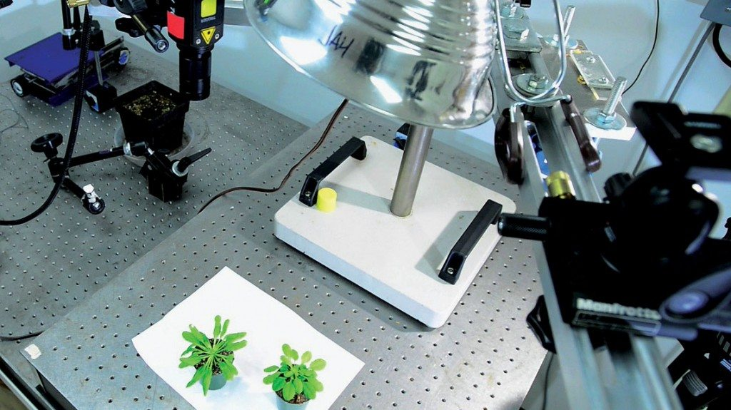 The team uses special lasers to listen to and record what the plant senses.