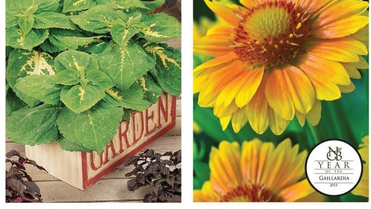 The National Garden Bureau and All-America Selections showcase new varieties that meet consumer demand.