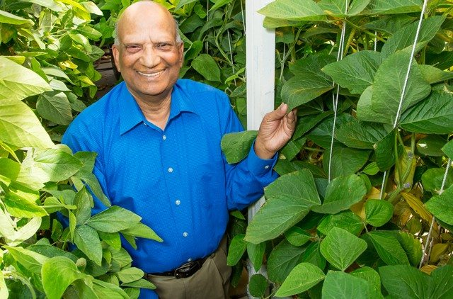 Ram Singh - research geneticist (USDA - Agricultural Research Service) Soybean research - crosses wild soybeans to create resistant variety to multiple pests, etc.