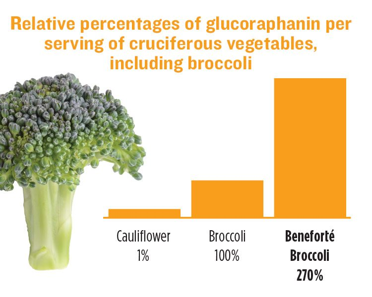Each serving of Beneforté broccoli naturally contains two to three times the phytonutrient glucoraphanin as compared to other leading commercial broccoli varieties grown under similar conditions.