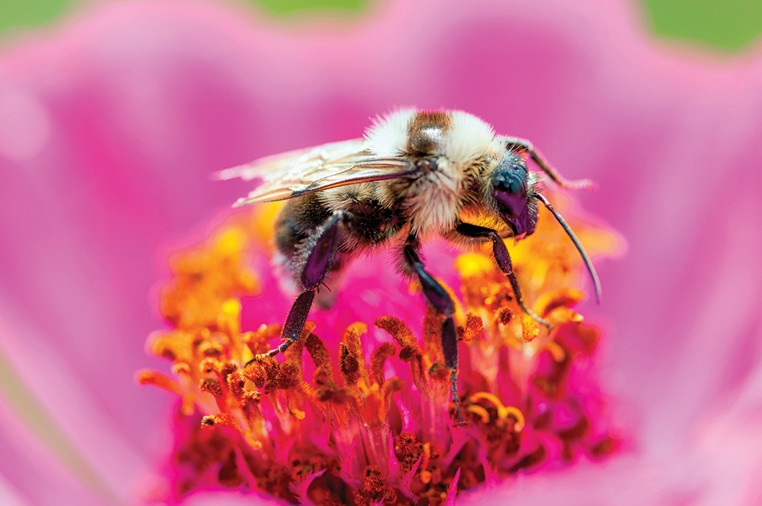 Through initiatives such as Bayer CropScience's Feed a Bee campaign, homeowners are encouraged to plant pollinator friendly gardens.