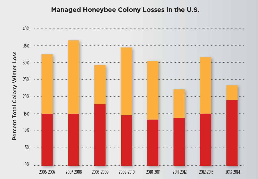 This chart summarizes the total overwinter colony loss each winter, from Oct. 1 to April 1, of managed honeybee colonies in the United States. The red bar is the average percentage of acceptable loss, and the orange bar represents the percentage of actual loss. Source: Bee Informed Partnership 2014.