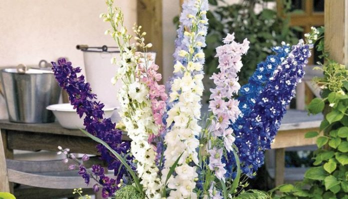 Year Of The Delphinium Seed World