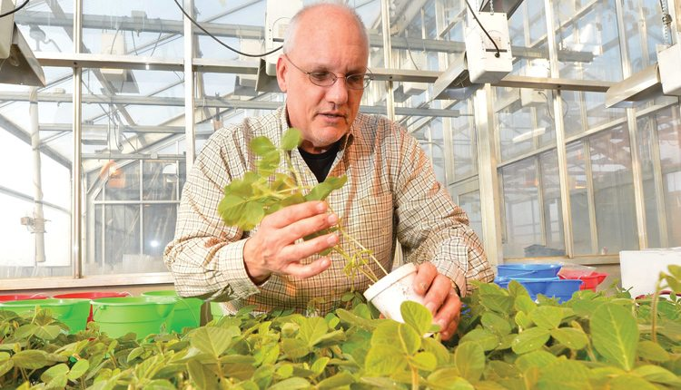 Greg Tylka is a professor at the Iowa State University's Department of Plant Pathology and Microbiology.