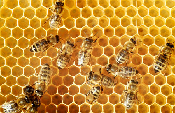Survey Shows Improved Hive Health