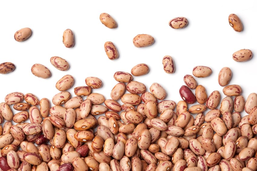 New Pinto Bean Variety Offers Ease Of Harvest Desired Characteristics Seed World