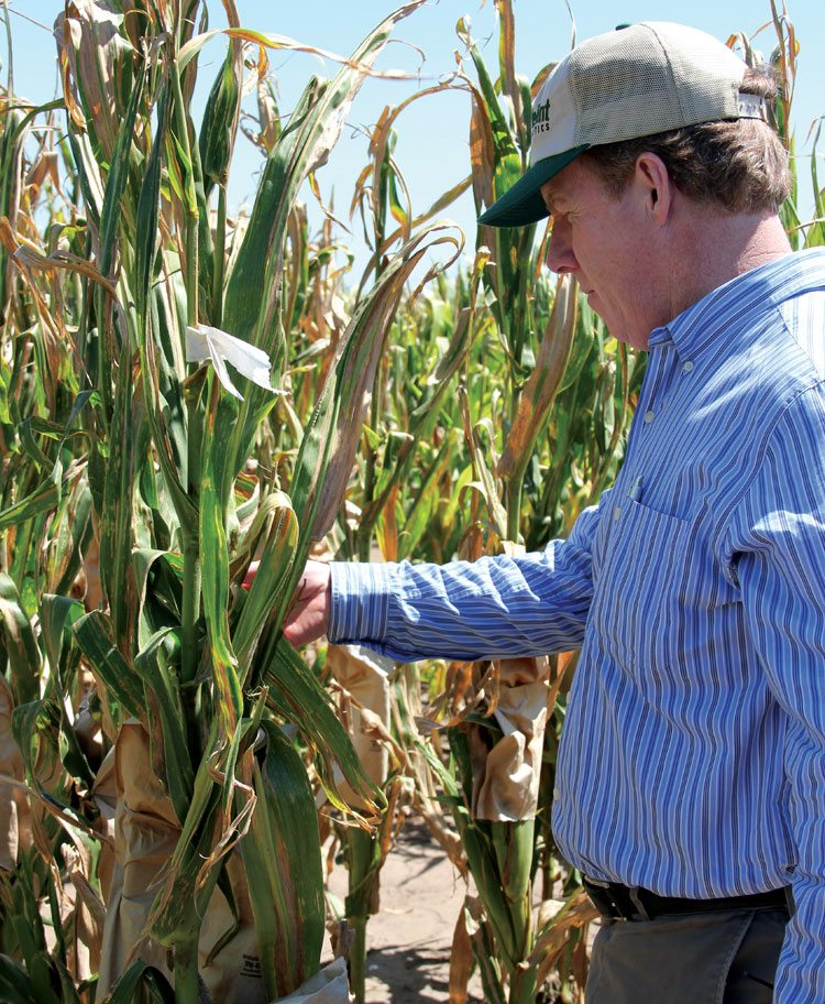 In Argentina, David Willmot, AgReliant Genetics native traits manager, examines a corn plant at a winter nursery.