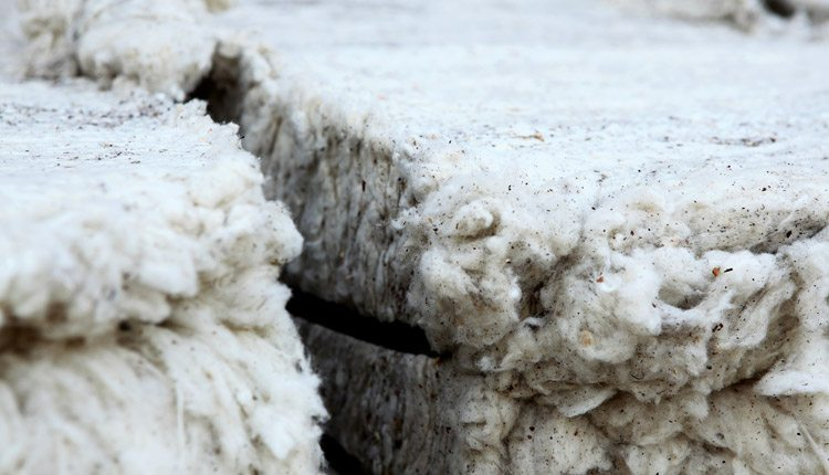 Bt cotton accounts for more than 85 percent of cotton production in China.