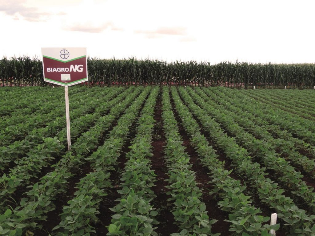 """Bayer works on extending the lifetime of the inoculant on the seed. """"Our target is at least 90 days,"""" says Casper van Rooijen."""
