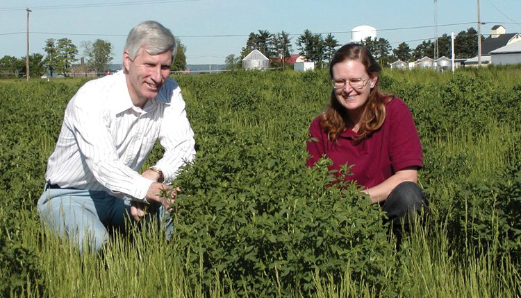 Donald Viands andJulie Hansen of Cornell University's alfalfa plant breeding team inspect an alfalfa plant that was selected for high forage vigor, freedom of diseases and other agronomic traits. Photo: Cornell University.