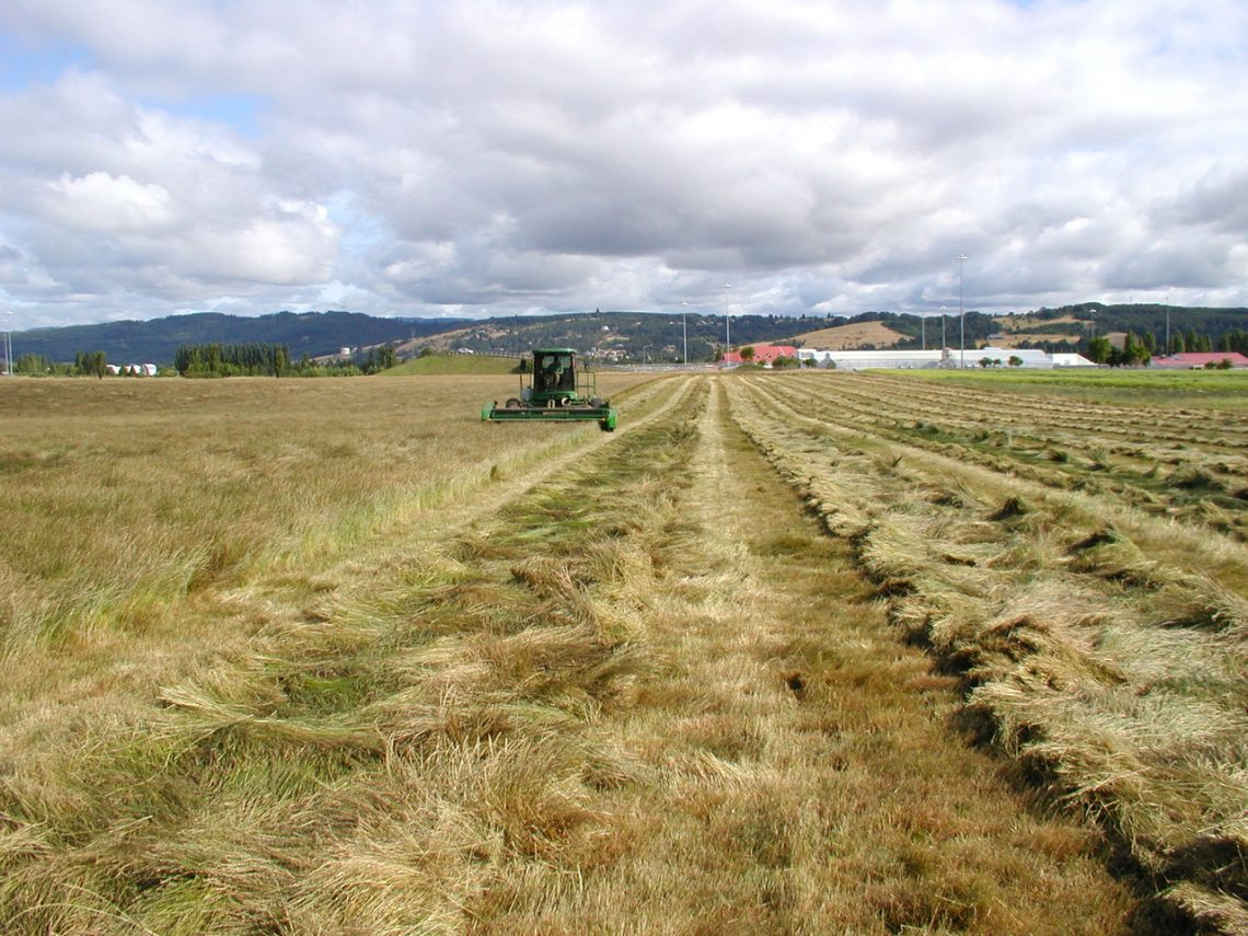 Perennial Ryegrass Acres Decline