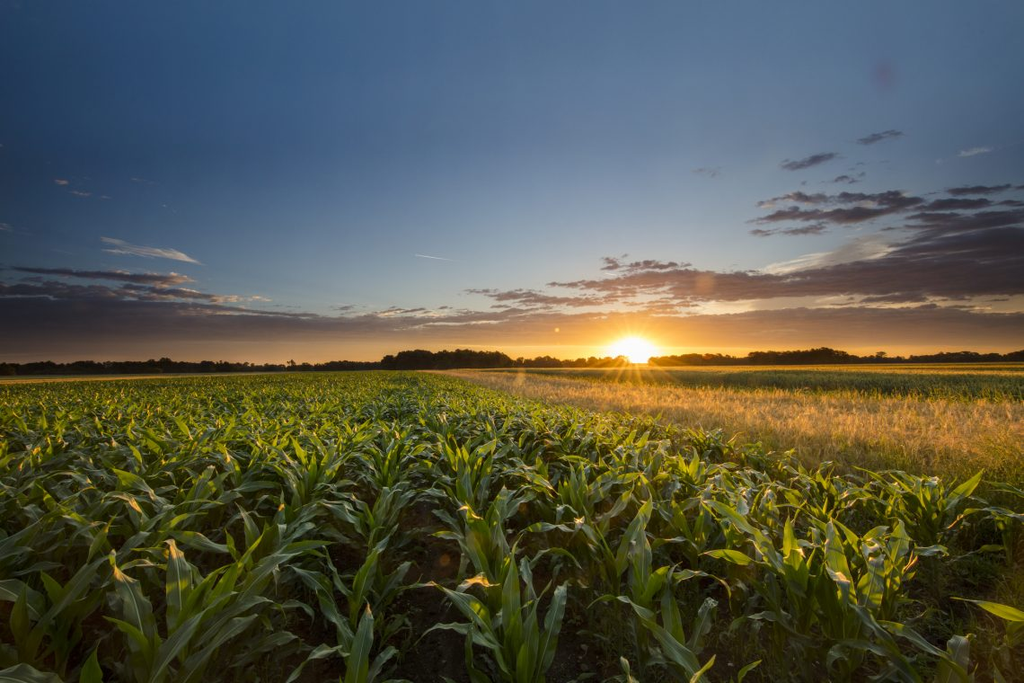 Innovation Broadens Scope of Corn Breeding Capabilities