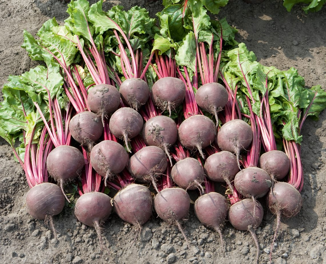 Year of the Beet